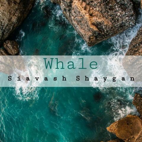 دانلود آهنگ جدید سیاوش شایگان نهنگ